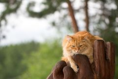 Bello gatto rosso Fotografia Stock Libera da Diritti