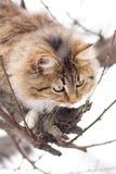 Bello gatto a strisce che si siede nella neve Fotografia Stock