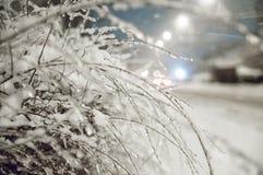 Bello gelo invernale bianco sugli alberi e sui cespugli fotografie stock