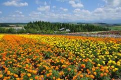 Bello giacimento di fiore dell'arcobaleno sulla collina Fotografia Stock