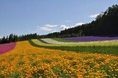 Bello giacimento di fiore dell'arcobaleno sulla collina Immagini Stock Libere da Diritti