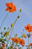 Bello giacimento di fiore nella natura Fotografia Stock Libera da Diritti