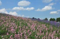 Bello giacimento di fiore sulla collina Fotografia Stock