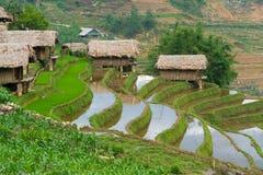 Bello giacimento a terrazze del riso nella provincia di Lao Cai nel Vietnam fotografie stock