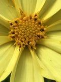 Bello giallo immagini stock