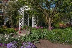 Bello giardino Immagine Stock