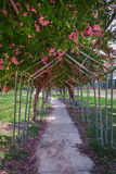 Bello giardino Fotografia Stock Libera da Diritti