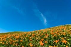 Bello giardino con il numeroso fiore Fotografia Stock Libera da Diritti