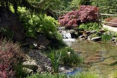 Bello giardino dell'acqua con una cascata e le piante della riva Immagini Stock Libere da Diritti