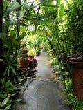 bello giardino dell'interno Fotografia Stock