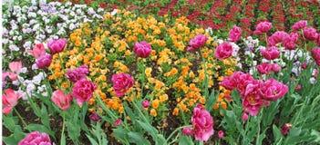 Bello giardino di fiore Immagine Stock Libera da Diritti