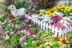 Bello giardino di fiore Immagini Stock