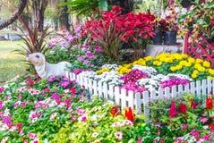 Bello giardino di fiore Fotografia Stock Libera da Diritti
