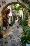 Bello giardino di fiore Immagine Stock
