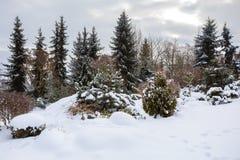 Bello giardino di inverno coperto da neve Fotografia Stock Libera da Diritti