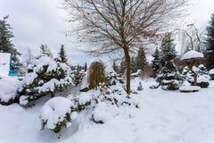 Bello giardino di inverno coperto da neve Fotografia Stock