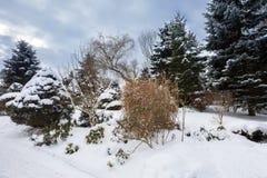 Bello giardino di inverno coperto da neve Immagine Stock Libera da Diritti