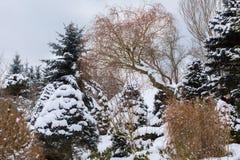 Bello giardino di inverno coperto da neve Immagini Stock Libere da Diritti