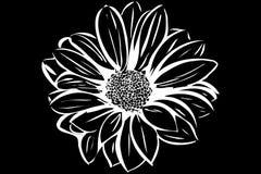 Bello giardino floreale di fioritura Fotografie Stock