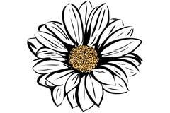 Bello giardino floreale di fioritura Fotografie Stock Libere da Diritti