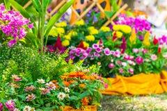 Bello giardino floreale su estate Immagini Stock