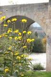 Bello giardino floreale sul fiume Immagini Stock