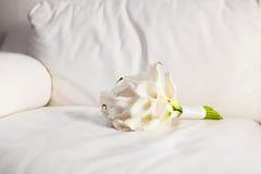 Bello giglio bianco Fotografia Stock