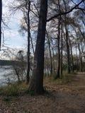 Bello giorno al paesaggio pacifico di divertimento della famiglia del parco romantico fotografie stock libere da diritti