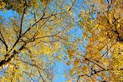 Bello giorno di autunno Immagini Stock