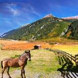 Bello giorno di autunno di Thq in alpi austriache Immagini Stock