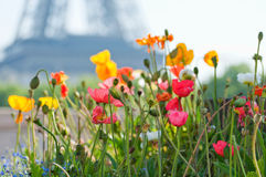 Bello giorno di estate a Parigi Fotografia Stock Libera da Diritti