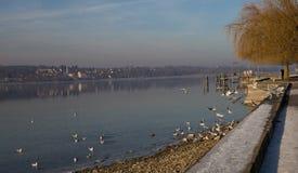 Bello giorno di inverni nel lago Fotografia Stock