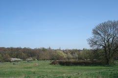 Bello giorno soleggiato al parco fotografie stock libere da diritti