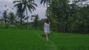 Bello giovane modello femminile in tunica che cammina lungo il giacimento del riso su Bali con la vista meravigliosa stock footage