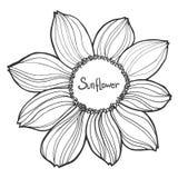 Bello girasole in bianco e nero isolato su fondo bianco Linee e colpi di contorno disegnati a mano Immagini Stock