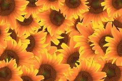 Bello girasole giallo illustrazione di stock