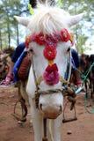 Bello giro del cavallo bianco Fotografia Stock Libera da Diritti