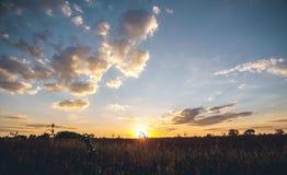 Bello, grande campo del campo di grano su un tramonto del fondo Fotografie Stock Libere da Diritti