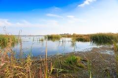 Bello grande lago con le canne Fotografie Stock Libere da Diritti