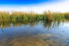 Bello grande lago con le canne Immagini Stock Libere da Diritti