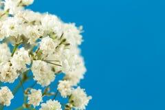 Bello gypsophila paniculata bianco isolato immagini stock