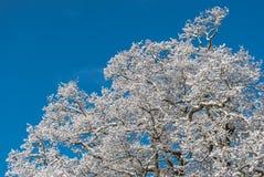 Bello inverno Fotografia Stock Libera da Diritti