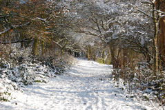 Bello inverno Fotografie Stock Libere da Diritti