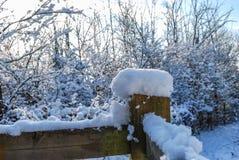 Bello inverno Immagini Stock