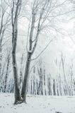 Bello inverno nella foresta fotografia stock libera da diritti