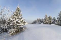 Bello inverno nelle montagne. Fotografia Stock Libera da Diritti
