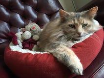 Bello Kitty dagli occhi verdi Immagini Stock