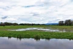 Bello lago Fotografie Stock Libere da Diritti