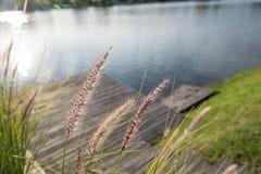 Bello lago con il pilastro di legno Country club Argentina Fotografie Stock Libere da Diritti