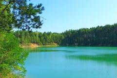 Bello lago della foresta con i pini Fotografia Stock Libera da Diritti